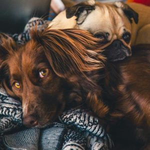 What Every Pet Owner Needs to Know About How Pets Affect Your Health
