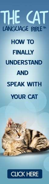 Learn To Speak With Your Cat!