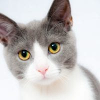 How To Keep Your Cat Healthy & Your Home Clean